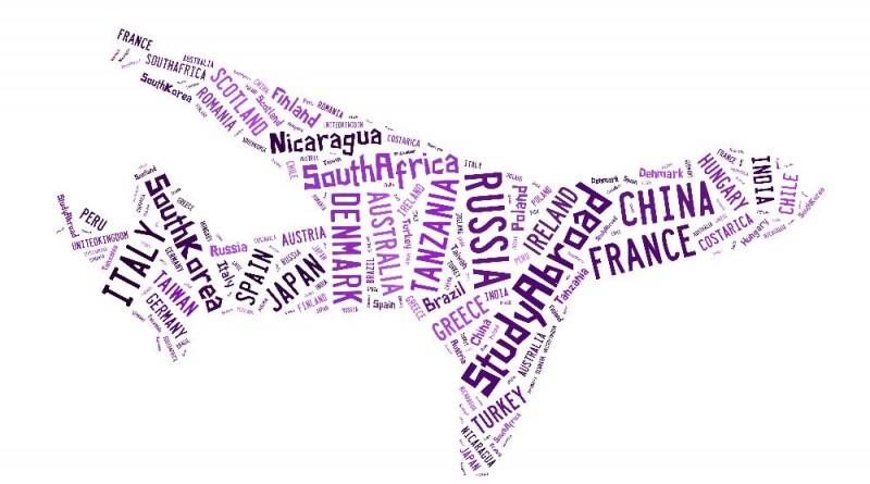 Purple Plane Collage