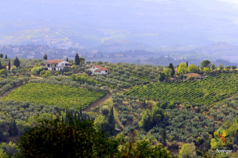 Sividuc_Tuscany (11)
