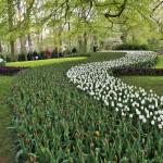 Vườn hoa Keukenhof Hà Lan