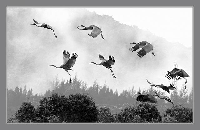 Cánh hạc trong sương - Liên hoan ảnh nghệ thuật đồng bằng sông cửu long
